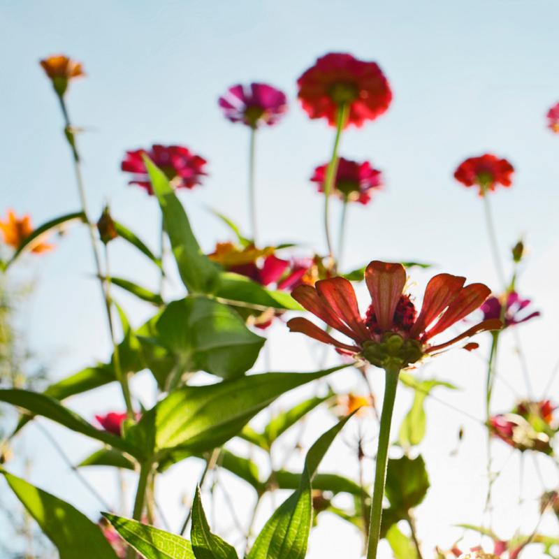10 handige tips voor het aanleggen van een bloemenborder
