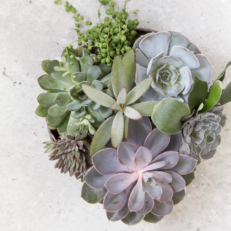 Mooi en makkelijk: de vetplant