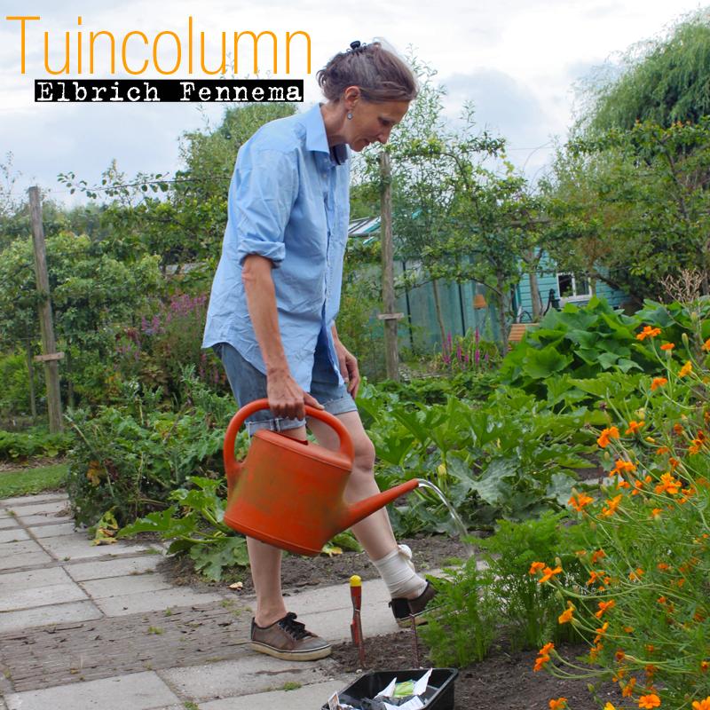 Tuincolumn: Verlangen naar tuinboontoppen