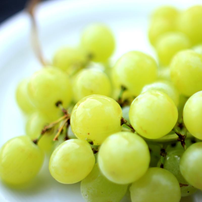 DIY: druiven snoeien
