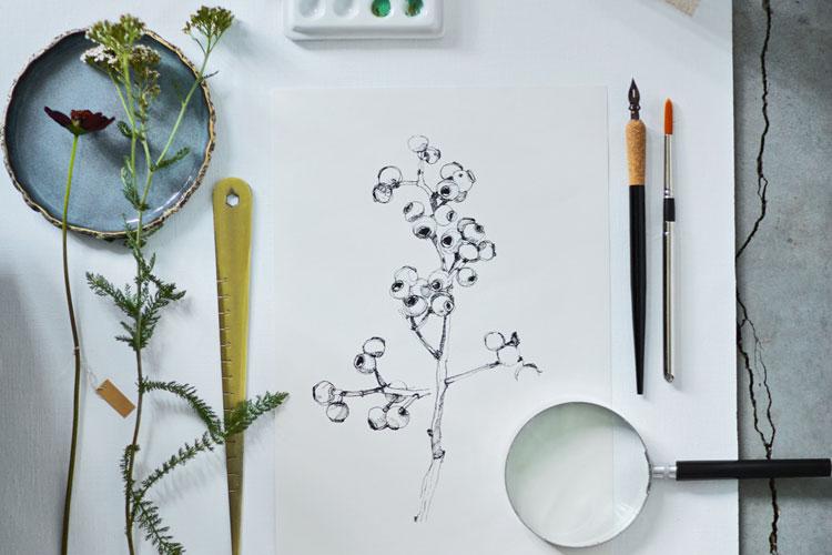 botanisch tekenen: op schilderslinnen tekening en materialen als kwasten, liniaal en pen
