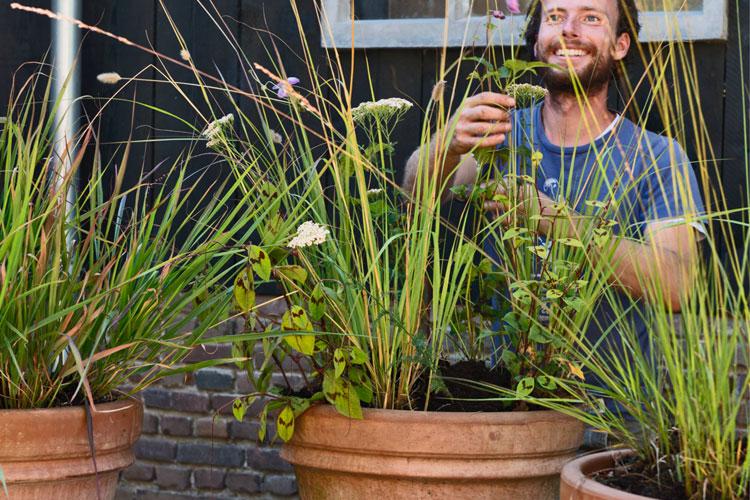 Siergrassen in pot, met kweker Frank achter drie terracotta potten op een rij