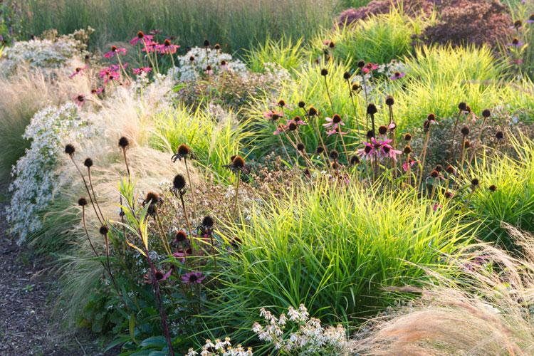 siergrassen: overzicht deel tuin met siergrassen en Echinacea