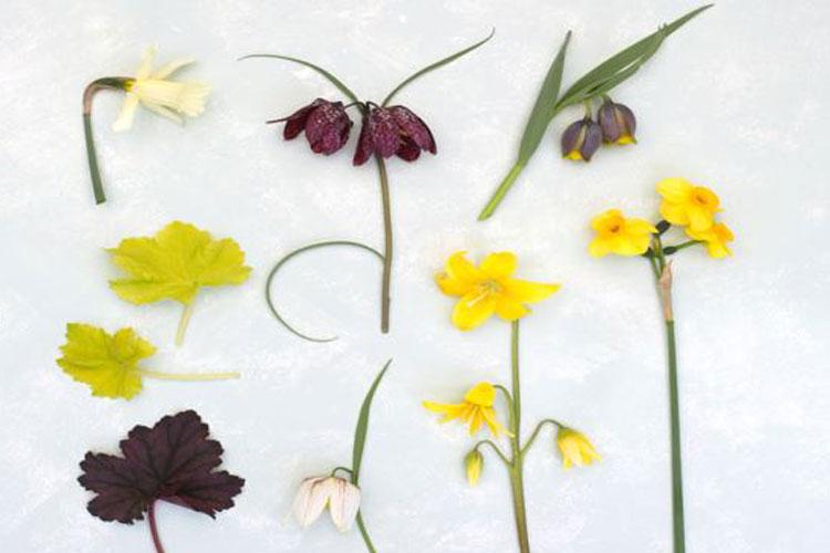 voorjaarsbollen: de soorten, uitgedekt