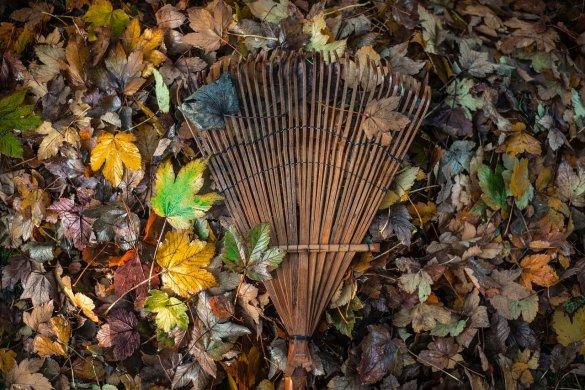 Tuinklussen herfst