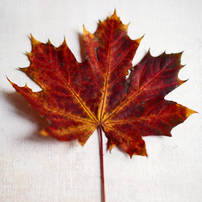3x zelfmakers met herfstblad