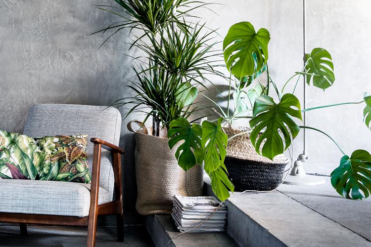 Favoriete kamerplanten for Grote planten voor binnen