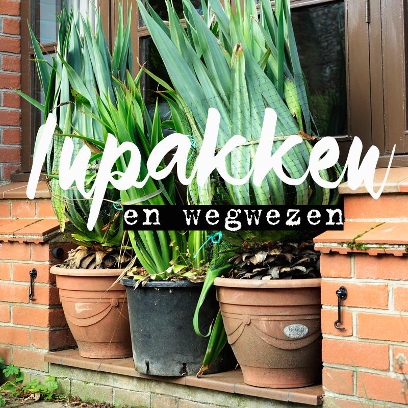 De winter komt er aan: pak je planten lekker in!