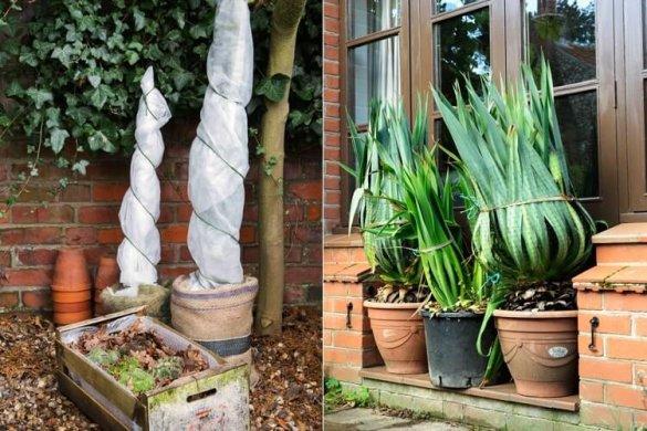 Planten inpakken in de winter