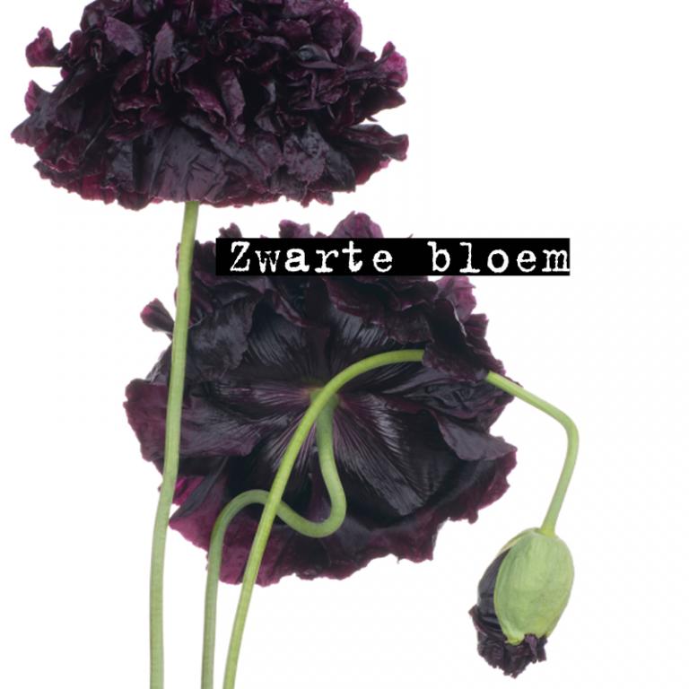 6x zwarte bloem