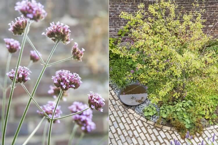 Kleine tuin Roermond
