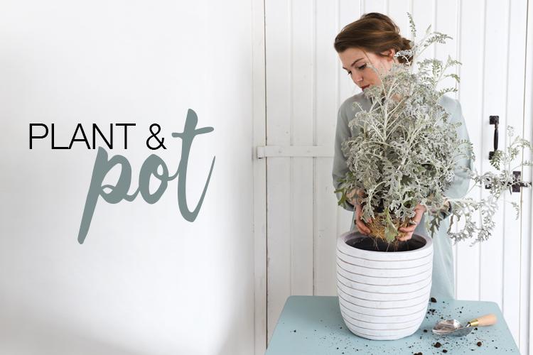 Plant & Pot - Capi