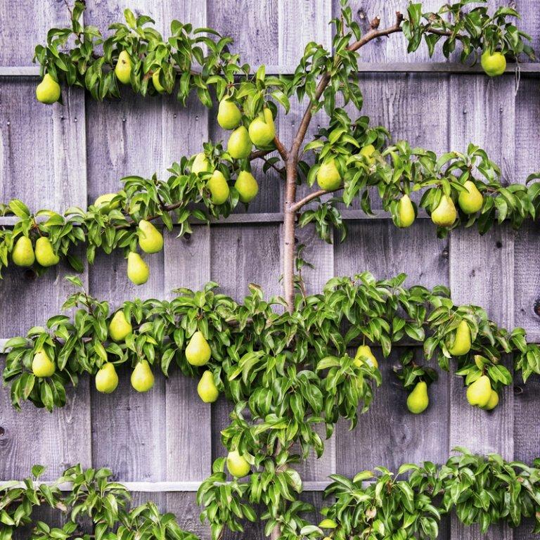 Maak plaats voor een mini fruitgaard