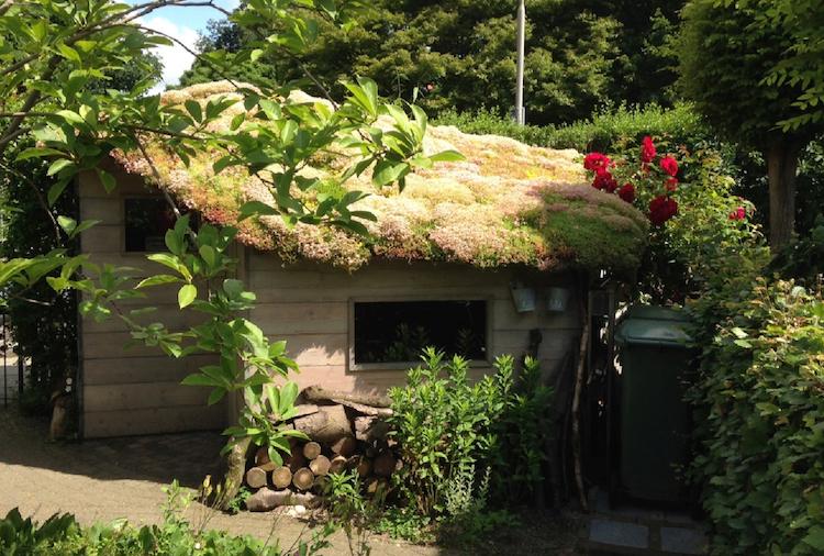 Een groen dak helpt!