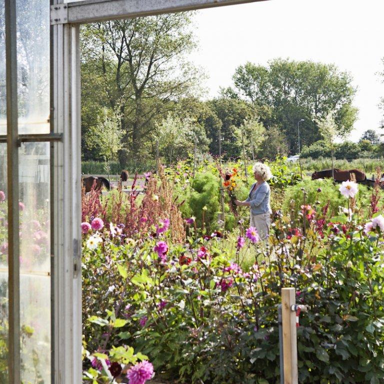Plukken uit eigen tuin