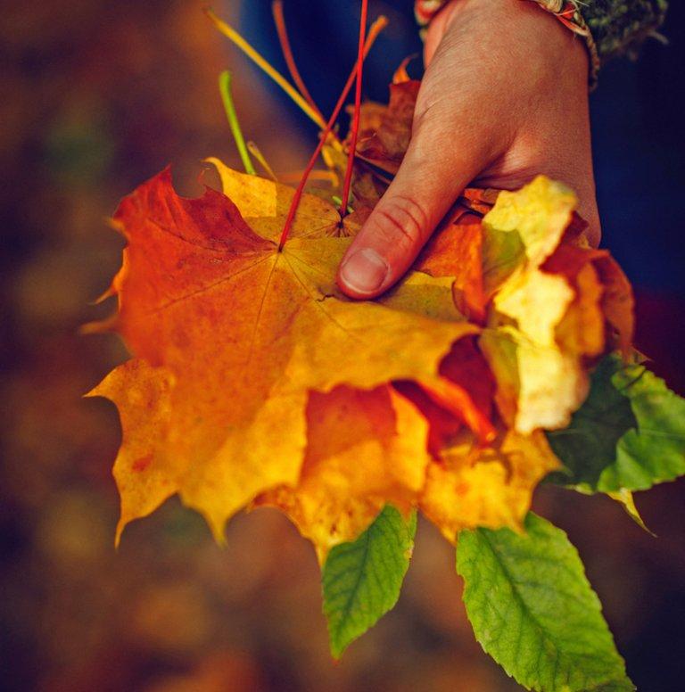 Afgevallen bladeren als potgrond