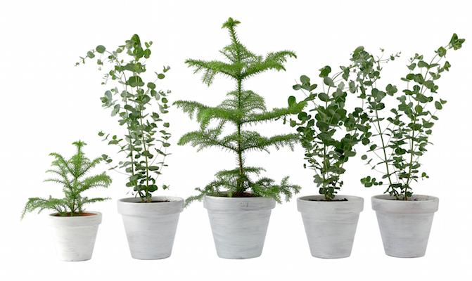Plantenpakket feestfavorieten