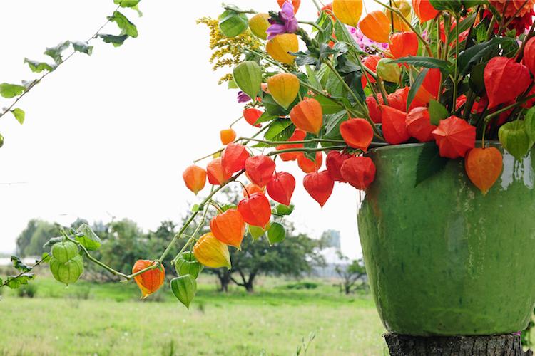lampionplant boeket herfstpluktips