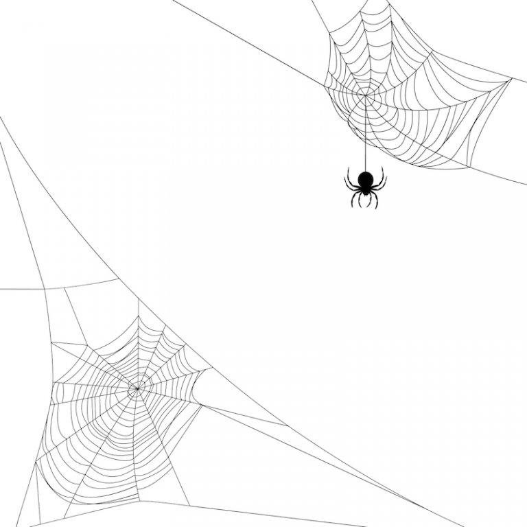 Hét middel tegen spinnen