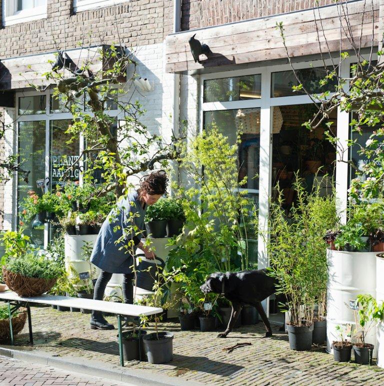 Femke's tips voor kamerplanten