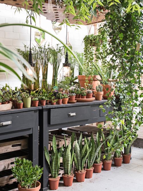 Kamerplanten plantaardig