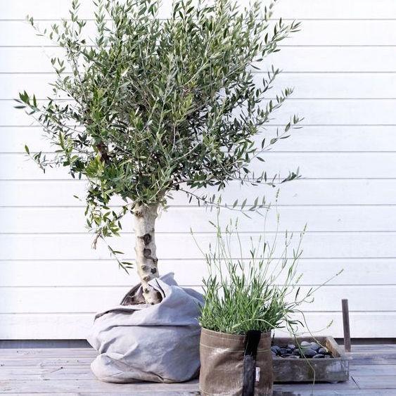 Zo voorkom je uitgedroogde planten