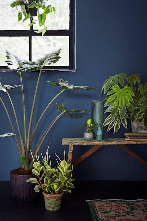 Home&Garden selecteert: 4x plantentafels