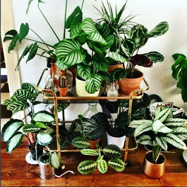 de balkonie planten