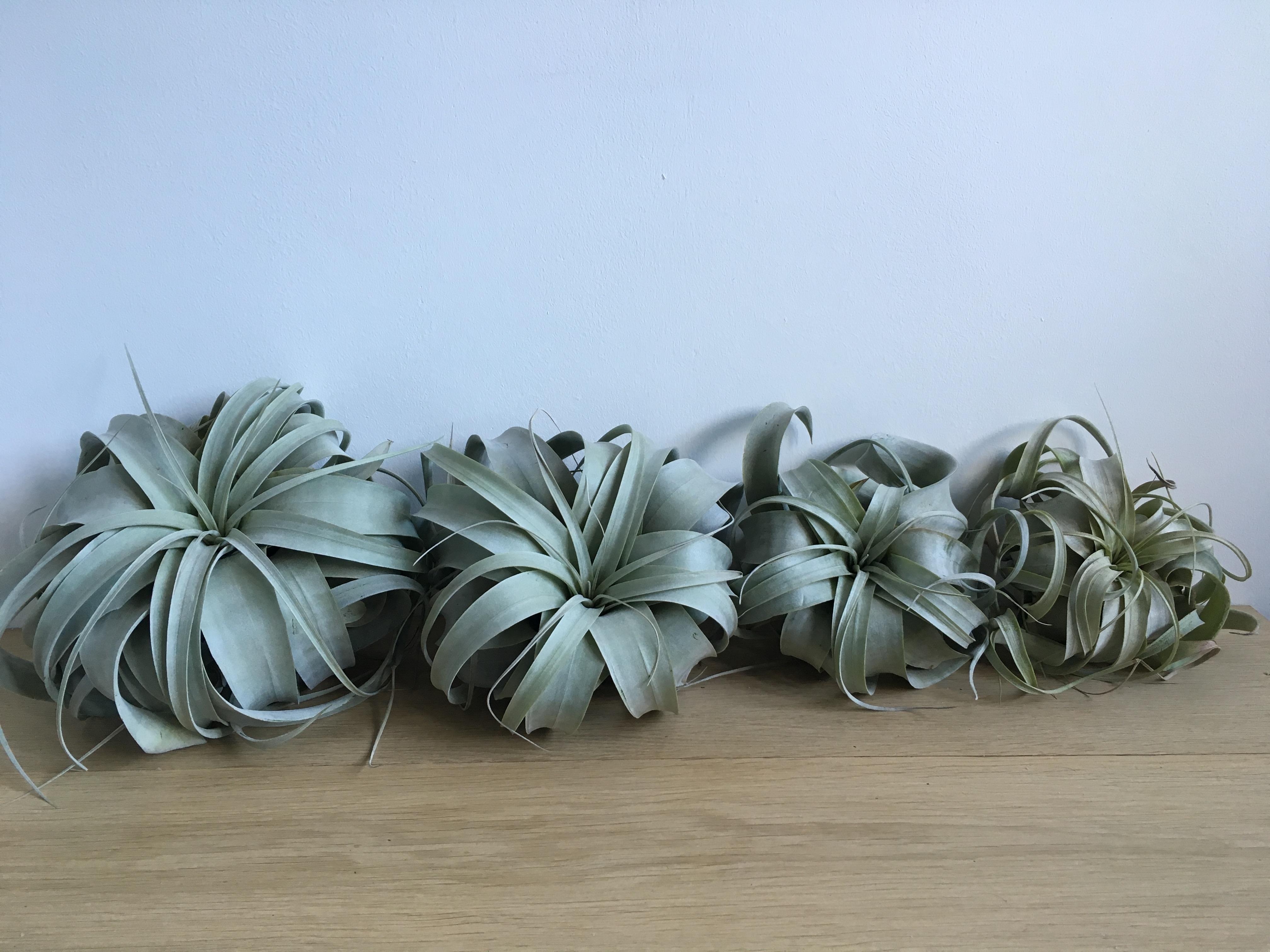 image_plant2