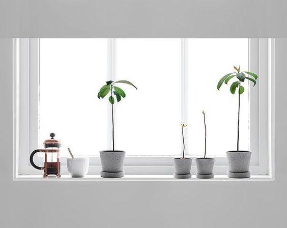 Avocadoplant: Wat & Hoe