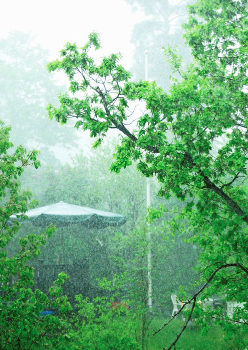 Ik Ben Tuinexpert. Dit Zijn Mijn 10 Tips Voor Een Regenproof Tuin.