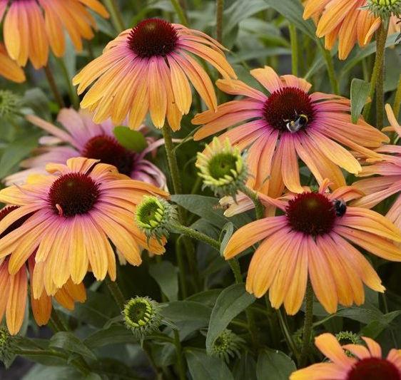 Wat Zijn Winterharde Planten?