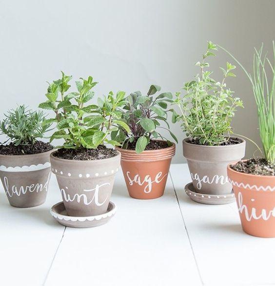 Keukengroen: Zo Houd Je Kruidenplanten Levend