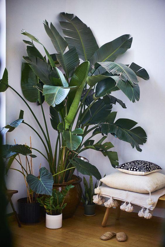 5x GROTE Kamerplanten