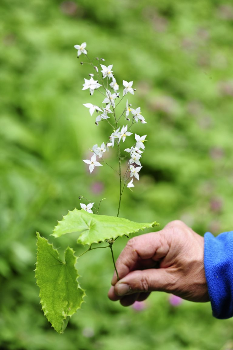 Er Even Tussenuit? Doe De Epimedium-Route