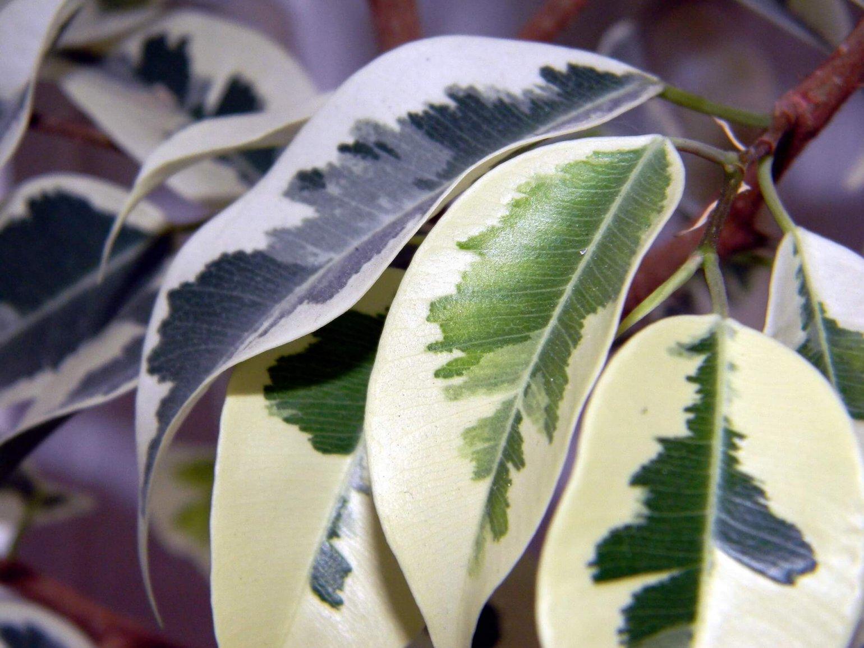 Plant gele bladeren