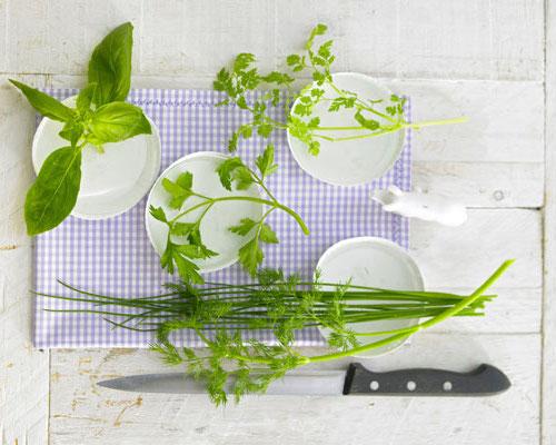 3x Tips Voor Verse Keukenkruiden