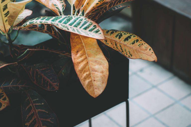 Waarom Krijgt Mijn Plant Gele Bladeren?