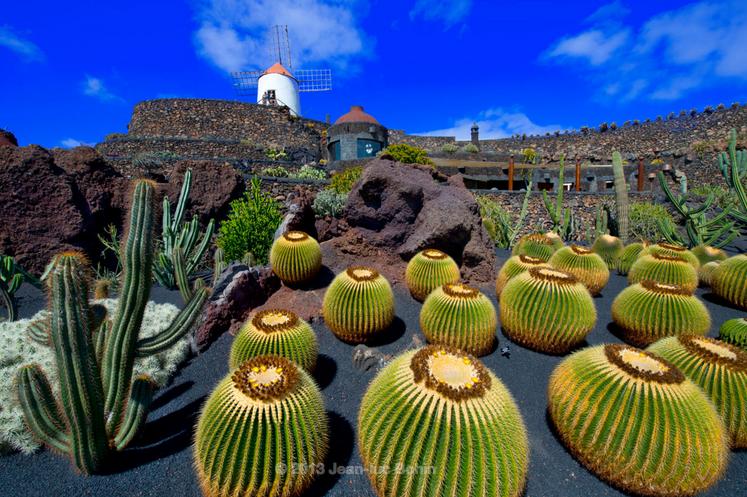 Reistip: Cactussen Op Lanzarote