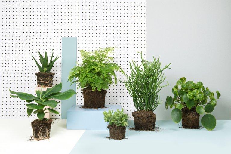 Winnen! 3x Krat Vol Buitenplanten