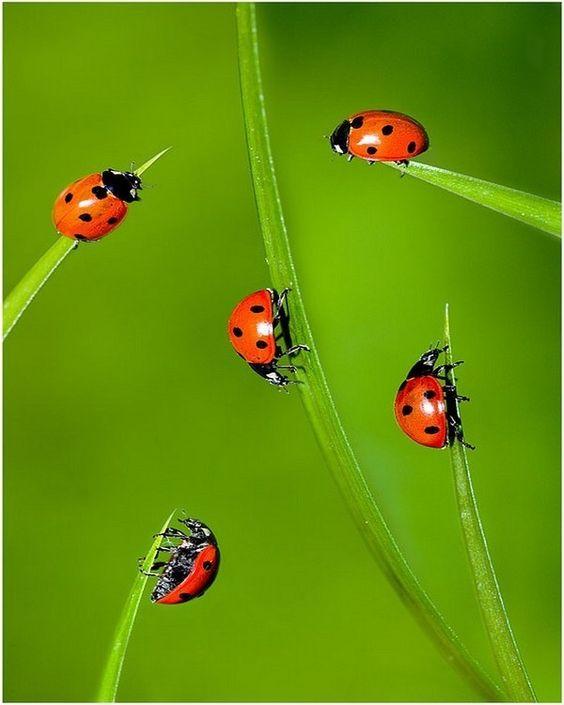 Zo Kom Je Van Schadelijke Insecten Af