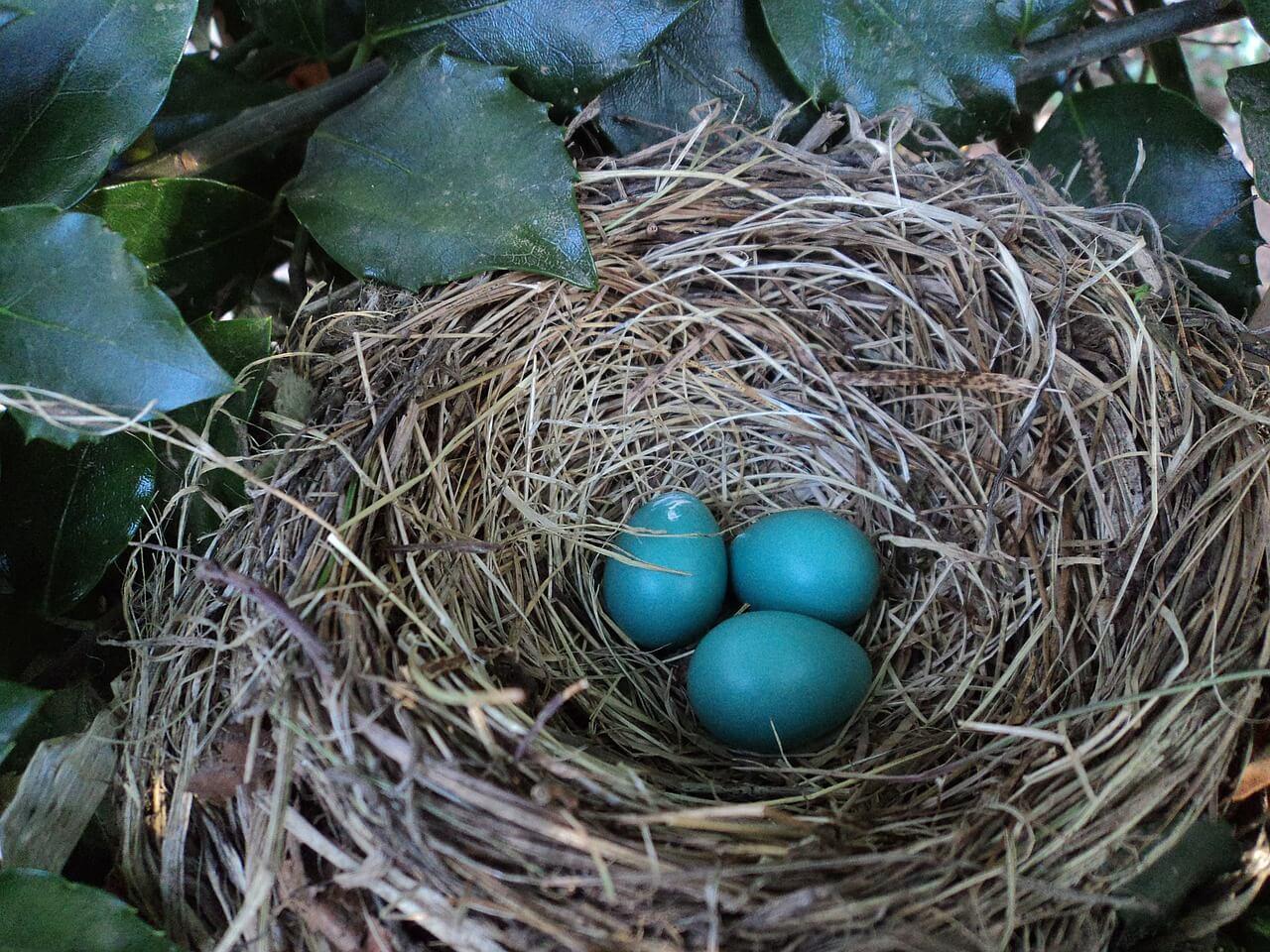 Vogelnestje met eitjes