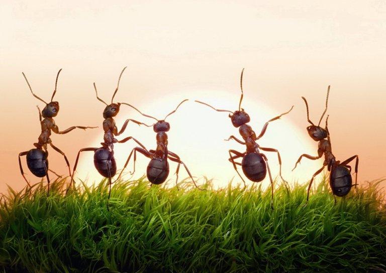 3x Weg Met Mieren