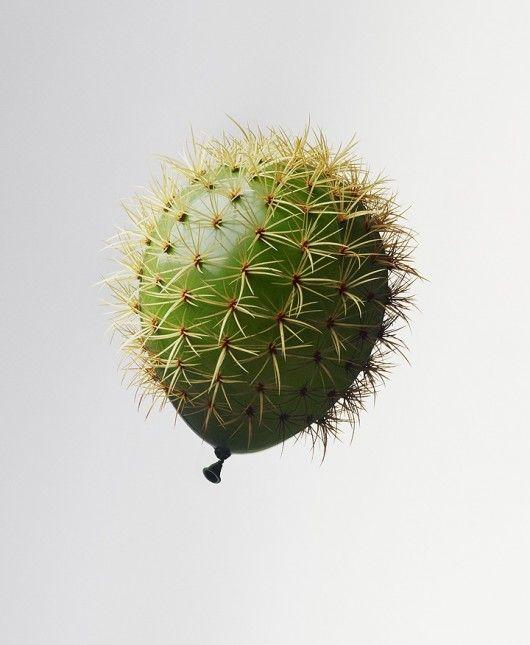 Deze Planten Willen Niet Naast Elkaar Staan