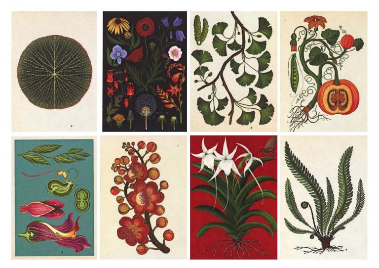 Boek Vol Botanische Kaarten