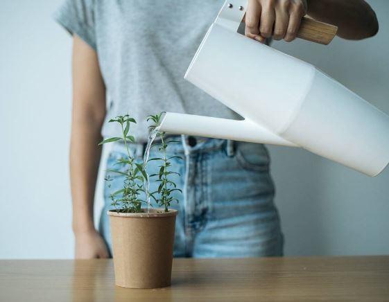 Hebben: Plantenpot/Beker