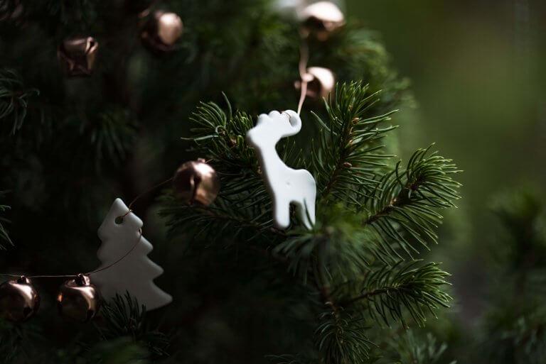 10 soorten kerstbomen