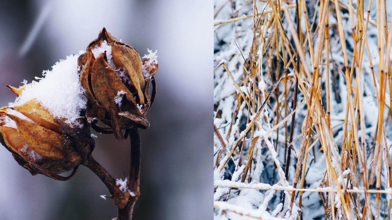 Tuinklussen januari winter