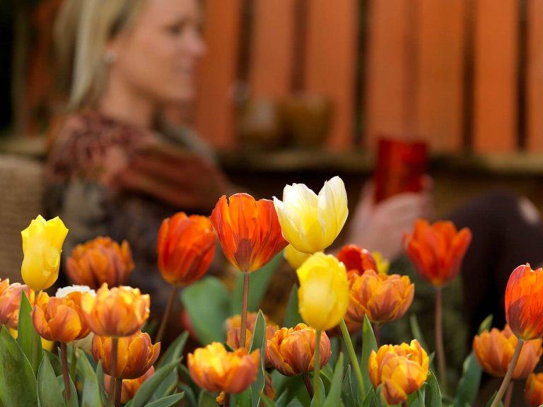 Koninklijke bloemen en planten