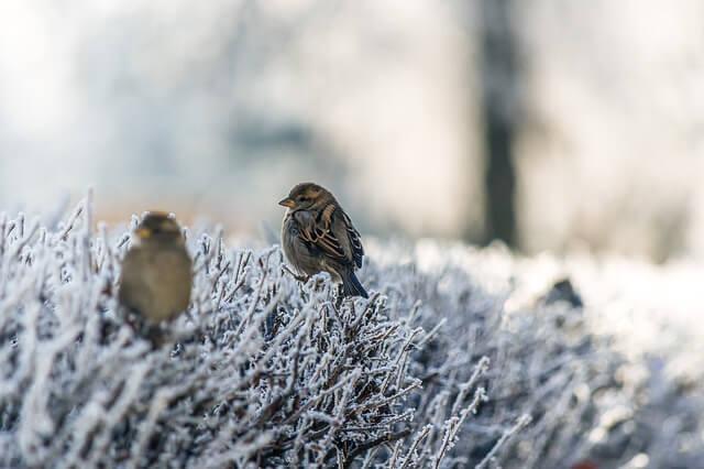 10x Vijver Inspiratie : Alle tuinklusjes voor januari homeandgarden.nl